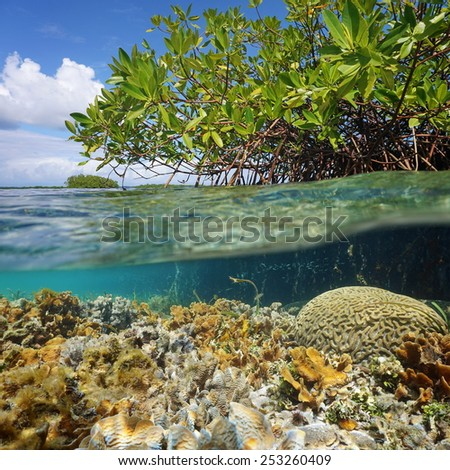 Over and under sea surface near an islet of mangrove with foliage above waterline and corals underwater, Caribbean, Panama - stock photo