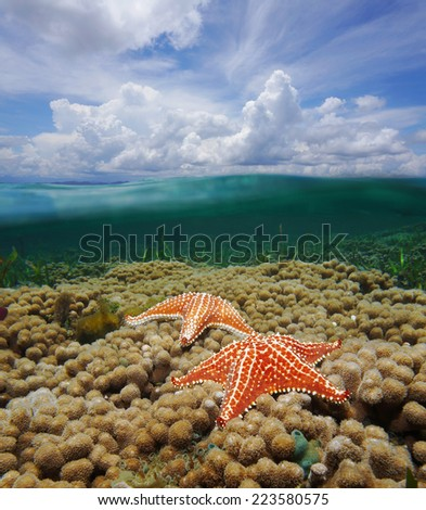 Over and under water surface of the Caribbean sea with starfish on coral reef and split by waterline a cloudy blue sky - stock photo