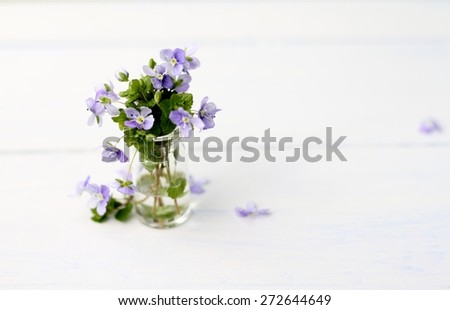 over exposed image of tiny forget me not purple flowers in a glass vial on white wooden floorboards, shabby chic simple image  - stock photo