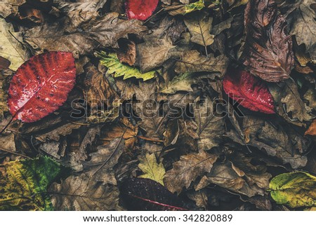 Over Head Shot of Autumnal Leaves  - stock photo