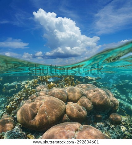 Over-under image, top half blue sky with cloud, and a coral reef underwater, Caribbean sea, Mexico - stock photo
