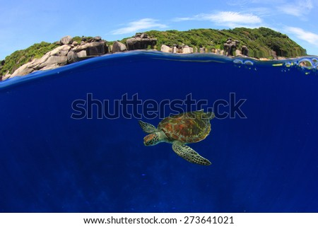 Over under split half and half of Green Sea Turtle and Similan Islands, Thailand - stock photo