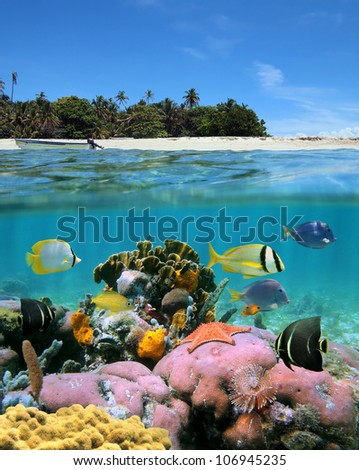Over-under view near a tropical island with sandy beach and underwater, colorful coral reef with tropical fish and a starfish - stock photo
