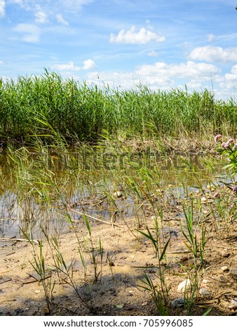 overcast day by the lake with water grass and blur background - vertical, mobile device ready image