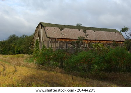 overgrown barn with gray clouds