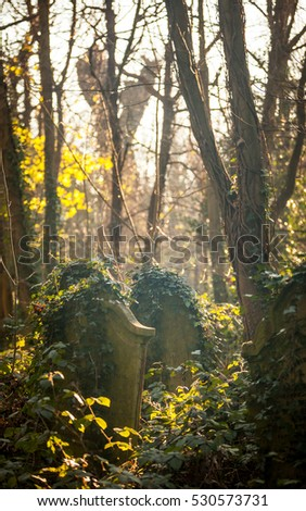 Overgrown English graveyard. Long forgotten grave stones taken over by weeds and ivy in an old Victorian cemetery in North London.