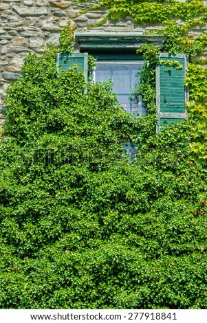 Overgrown Green Ivy Covering Old Dilapidated Window - stock photo