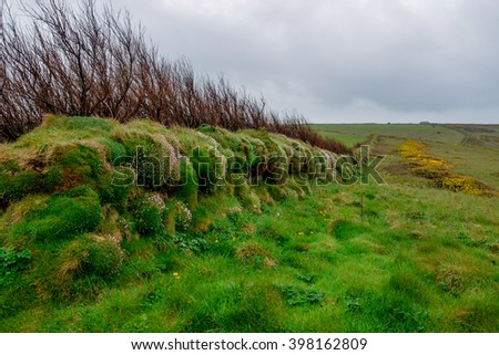 overgrown hedge in the fields of Cornwall England, United Kingdom