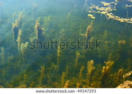 Overgrown summer lake with alga and water lily - stock photo