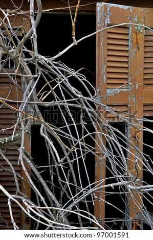 Overgrown tangled tree branches and broken window shutter of derelict house. - stock photo