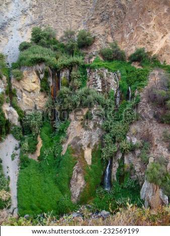 overgrown vegetation detail at Colca Canyon in Peru ( South America) - stock photo
