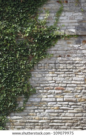Overgrown wall with green twines