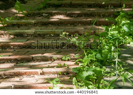 overgrown with grass old brick road in the park - stock photo