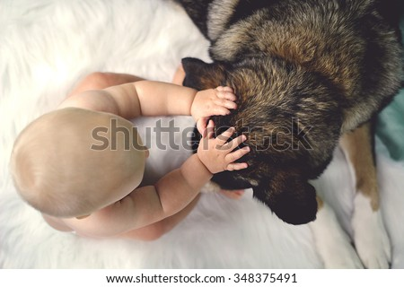 Overhead view of a 6 month old baby petting her rescued German Shepherd Mix breed dog on the ears. - stock photo