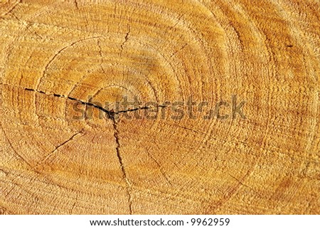 Overhead view of a recently cut tree stump - stock photo