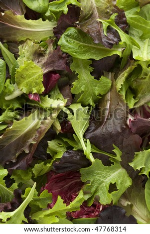 Overhead view of mixed salad leaves - stock photo