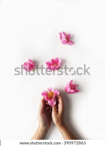 Overhead view of pink tulip in girl's hand isolated on white background. Flat lay, top view - stock photo