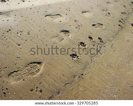 Overhead view on the wet sand at the beach with footprints shoe soles and dog tracks. - stock photo