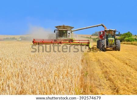 Overloading grain harvester into the grain tank of the tractor trailer - stock photo