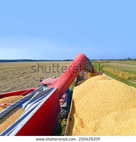 Overloading of maize from the hopper to the tractor vehicle.