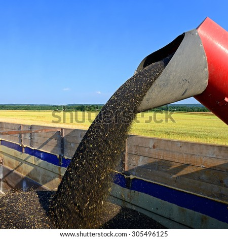 Overloading rapeseed tractor with hopper in the car - stock photo