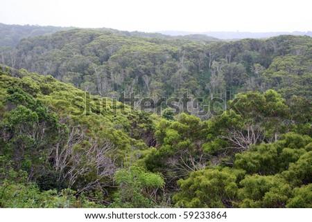 Overlooking the dense Hawaiian rainforest on the island of Kauai. - stock photo