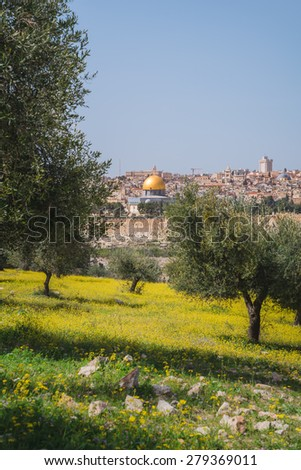 Overlooking the Dome of the Rock from a field of yellow flowers in Jerusalem, Israel. - stock photo