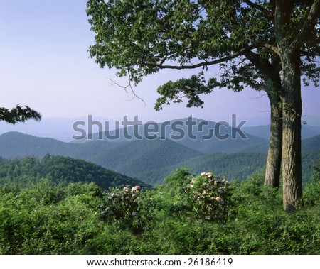 Overlooking The Lush Ridges Of Shenandoah National Park, Virginia
