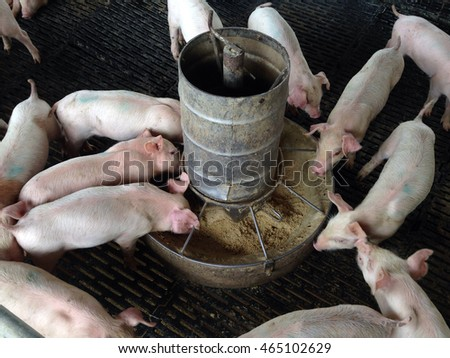 Overview of pig breeding farms. pigsty