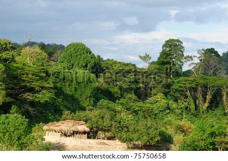 Overview of the jungle and river in Taman Negara National Park, Malaysia