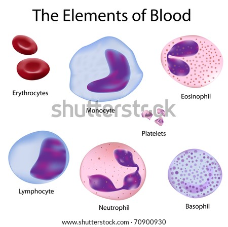 Overview of the structure of the elements of the blood, depicted with scientific accuracy - stock photo