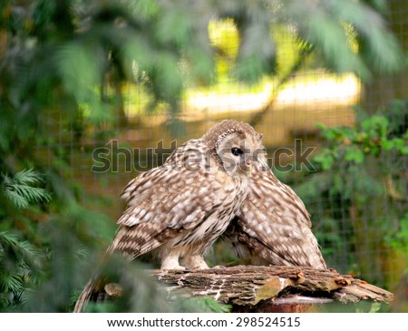 Owl. - stock photo
