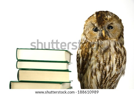 Owl at a book pile at a white background - stock photo