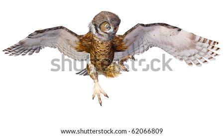 owl attacking - stock photo