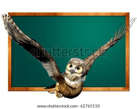 owl blackboard - stock photo