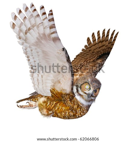 owl casual flying - stock photo