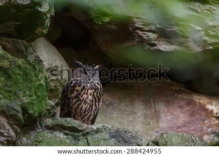 owl eagle on the rock - stock photo