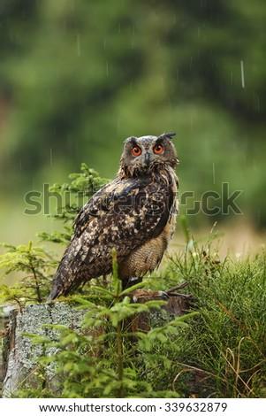 owl eagle portrait close up in the rain - stock photo