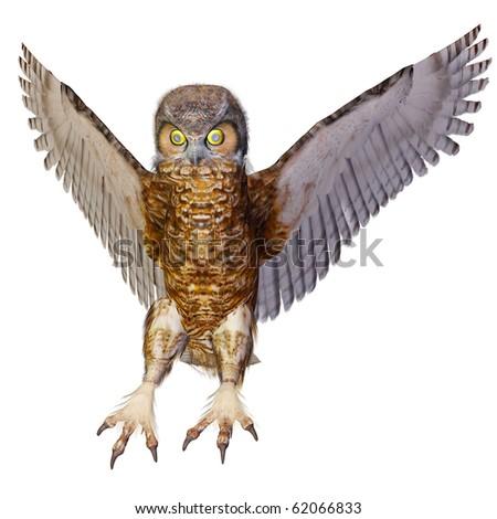 owl hunting - stock photo