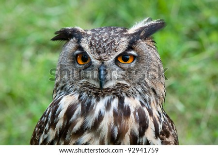 Owl in detail - stock photo