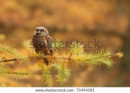 Owl in the forest during the sunset - stock photo