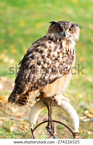 Owl on a perch - stock photo