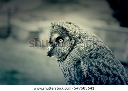 Owl on display, detail from a wild bird in captivity, animal beautiful