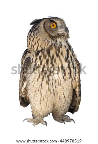 Owl Photo (Bubo Bubo) on a white background. Caucasian form - stock photo
