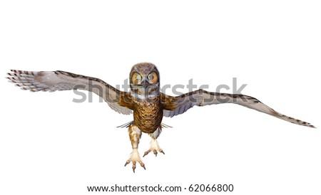 owl running - stock photo