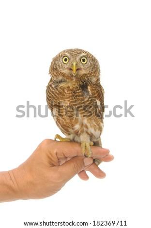 owl sitting on handler's hand - stock photo