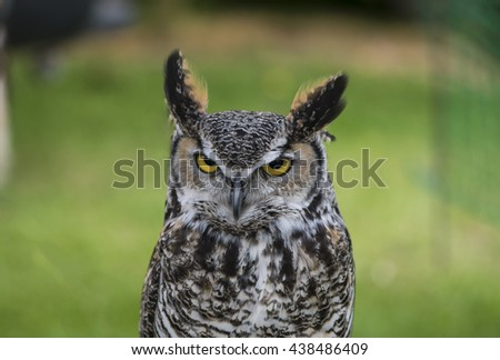 Owl standing in a post closeup - stock photo