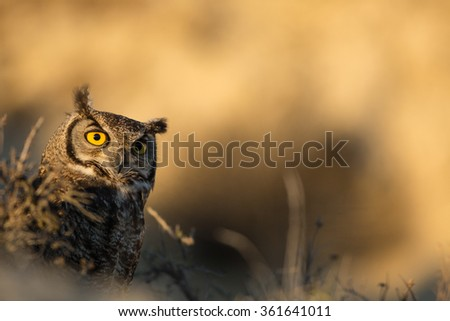 Owl waiting for his prey - stock photo