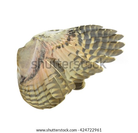 Owl wings isolated on white