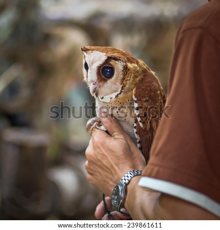 Owls are on the men's arms. - stock photo
